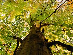HUNTLY WOOD NR. BANBRIDGE CO DOWN (Monkiiiey Henry Clark) Tags: huntly wood nr banbridge co down the fall
