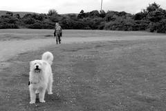 woof (lozinka_gergova) Tags: woof doggy doggyfriend whitedog friendly walk hi scotland highlands brora nikon nikond610 nikkorlens nikonphotography