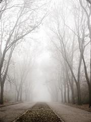 fogg in a path (Darek Drapala) Tags: fogg panasonic poland polska panasonicg5 park path skaryszewski mood morning mystery mystic trees autumn lumix light landscape