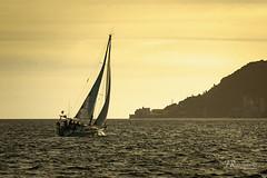 Sailling at sunset (José Rasquinho) Tags: mar sea barco boat sunset setúbal bay baía rasquinho sony