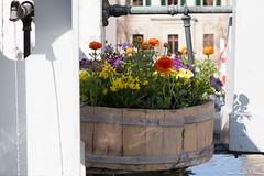 Jeux d'ombres (Elyane11) Tags: rue genève fontaine fleurs ombres lumière ville