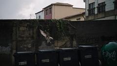 Rainbird (Stefan Waldeck) Tags: bird seagull houses wall grafitti recyclestation porto portugal 2019 netzki stefanwaldeck stefan waldeck