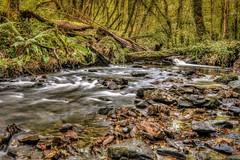 Woodland Stream in Autumn (dmoon1) Tags: fujifilmxt2 cavan dunnari river autumn