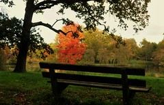 Take a seat (wilma HW61) Tags: bank bench panchina banc herfst herbst autumn automne autunno fall najaar herfstkleuren compositie composition pov park stadspark citypark parcdelaville parcocittadino coloriautunnali couleursdautomne autumncolours natuur nature natur naturaleza engelsewerk zwolle overijssel nederland niederlande netherlands nikond90 holland holanda paysbas paesibassi paísesbajos europa europe outdoor wilmahw61 wilmawesterhoud happybenchmonday