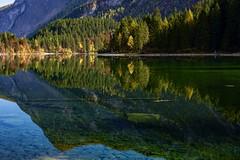 Ombre d'Autunno (giannipiras555) Tags: lago autunno ombre tovel trentino alberi dolomiti landscape panorama paesaggio colori verde green riflessi natura nikon