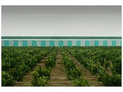 Market garden rows (Greymark) Tags: agriculture factorys industrial landscape spain murcia rows marketgarden minimalism minimalistlandscape