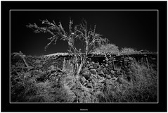 Abandoned, La Palma, Canary Islands (Bartonio) Tags: bw canaryislands garafía ir islascanarias lapalma sonya7ir abandonado abandoned blanconegro infrared laowa1018mm45 modified