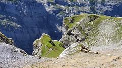 Steep drops (Vincent_Thonnart) Tags: alpes schweiz suisse kandersteg gasteretal halpigang switzerland im hiking alpen wandern randonnée fisistock halpi