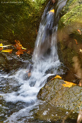 Doris MaCarthy trail (Arvo Poolar) Tags: dorismccarthytrail water waterfall cascade rocks arvopoolar leaves outdoors ontario canada scarborough naturallight nature natural naturephotography