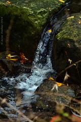 Doris MaCarthy trail (Arvo Poolar) Tags: dorismccarthytrail outdoors ontario canada arvopoolar nikond500 water waterfall cascade rocks leaves scarborough naturallight nature natural naturephotography