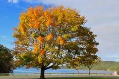 Autumn Color at Quabbin Reservoir (Piedmont Fossil) Tags: quabbin reservoir massachusetts autumn fall leaves color tree lake