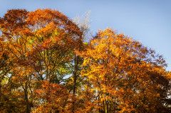 Fall Blue Ridge Parkway 2019 8 (rschnaible) Tags: autumn fall outdoor landscape blue ridge parkway north carolina mountains color colorful the south