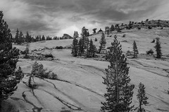 Granite and Conifers (San Francisco Gal) Tags: olmstedpoint yosemitenationalpark ynp granite conifer monochrome bw hill peak
