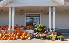 // la saison des potirons (Riex) Tags: pumpkin courge potiron orange vegetable legume food nourriture fall automne autumn belmont california g9x