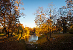 Autumn Sunset (VladimirTro) Tags: россия царскоесело осень пейзаж природа закат russia russian tsarskoyeselo tree sunset green yellow water park garden canon500d landscape
