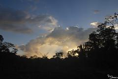 Rainforest (Kusi Seminario) Tags: selva jungle rainforest nature outdoors landscape paisaje peru tambopata madrededios rio river southamerica sudamerica travel art canon eos 7dmarkii sunset clouds trees arboles forest sky