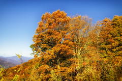 Fall Blue Ridge Parkway 2019 7 (rschnaible) Tags: autumn fall outdoor landscape blue ridge parkway north carolina mountains color colorful the south
