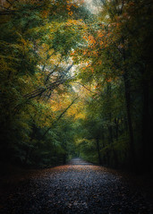 Changing (RTA Photography) Tags: autumn boveytracey parke dartmoornationalpark trees light nikon d750 tamron2470mmf28vcusd rtaphography woodland nature outdoors leaves
