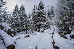 Siguiendo las huellas (SantiMB.Photos) Tags: 2blog 2tumblr 2ig conangles nieve snow otoño autumn bosque forest árboles trees camino way path sendero geo:lat=4262161750 geo:lon=076910750 geotagged senet cataluna españa