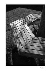 Timber #3 (radspix) Tags: canon t90 fd 3570mm f4 arista edu ultra 100 pmk pyro