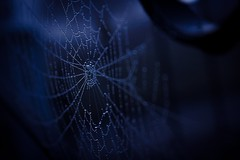 Spiders Web (jmiller35) Tags: spiders web dew drop droplets water morning light sparkle canon low