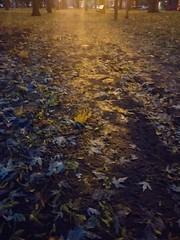 Petit matin de novembre (AlainC3) Tags: montreal automne autumn petitmatin leverdujour aurore feuilesmortes fallingleafs couleurs colours colors