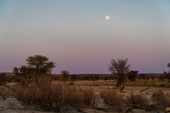 Kgalagadi Transfrontier National Park, South Africa (nadine3112) Tags: birdhide kgalagaditransfrontierpark mond sonnenaufgang