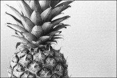 The Pineapple - Kodak Tmax 3200 (magnus.joensson) Tags: pineapple fruit tropical kodak tmax 3200 blackandwhite bw 24x36 canon eos 300 tamron sp 45mm f18 di vc usd