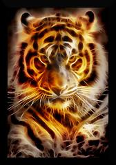 Fire Tiger (g017 - g017.deviantart.com) Tags: tiger portrait face digital digitalart animal art orange black awardtree