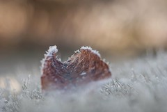 Vintage lens photography (steffos1986) Tags: nature leaves red yellow white green frost ice cold winter beautiful grass fineart art macro bokeh vintage manualfocus kaleinar100mmf28 russian nikond80 dslr dof light sun
