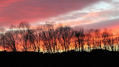 Sunset (montseny visions) Tags: beauty catalonia catalunya colors color ciel clouds dream red earth cel light field wildlife life wild sky landscape montseny ngysa nature naturephotography natural naturalworld naturephoto outside outdoor palautordera tree sun sunset trees view