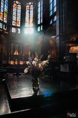 The light (Digifred.nl) Tags: digifred 2019 nikond500 amsterdam nederland netherlands holland iamsterdam straat street city grachten streetphotography grachtengordel basiliekvandeheiligenicolaas bloemen zonlicht kerk flower sunlight church light licht