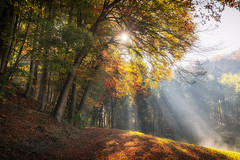 L u m i n o u s  II (der_peste (on/off)) Tags: forest raysoflight raysofgod sunrays sunbeams sunlight sun rays mist fog autumn fall autumncolors autumnal