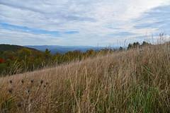 THE LUMP OVERLOOK (MP 264.4) - 102519-11-2618 (Glenn Anderson.) Tags: overlook blueridgeparkway fallcolor morninglight pointofinterest morning sunshine northcarolina distantclouds autumndisplay rollinghills smokymountains tomdula
