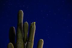 (ncramirez548) Tags: nightsky stars fujixt2 fuji longexposure saguaro southwest desert az arizona