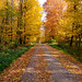 Forest in the fall (13)