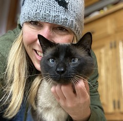 Our Siamese kitty, Simon (Kim Beckmann) Tags: simon cat siamese furbaby simoncatssiamese