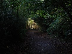 Light at the end of the tunnel (Phil Gayton) Tags: path track tree hedge foliage sunlight sharpham drive heritage trail totnes devon uk