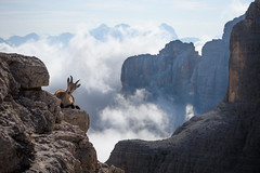 Living high (George Pancescu) Tags: nikon d810 70200mm ibex cimapisciadu peak dolomites mountains italy nature landscape wildlife wildmountaingoat outdoor clouds sky