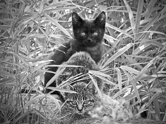 Minohara Park, Ibaraki, Japan (Z_marukun) Tags: 猫 ネコ gatto gatti cat cats nikonp900 coolpix coolpixp900