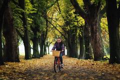 PB037347 (gezzajax) Tags: autumn colour autumncolours park bike cycling 2019 dublin ireland fairviewpark trees leaves falling fall thefall islabike cnoc20