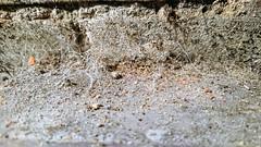 Camberley 1 November 2019 057 (paul_appleyard) Tags: macro closeup web dust decay crumbling brickwork november 2019