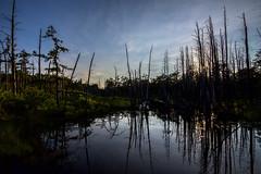 cedar reflections (primemundo) Tags: sunset pinebarrens cedars whitecedar njpinebarrens reflections bog landscape horizon southjersey