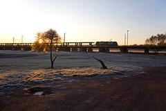 HSL 185 + Güterzug/goederentrein/freight train   - Biederitz (Rene_Potsdam) Tags: hsl biederitz sachsenanhalt br185 treinen trains treni trenes züge tren spoorwegen goederentrein europe freighttrain güterzug germany duitsland deutschland europa