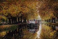 Autumn glory at the royal canal Dublin. (sharonh359) Tags: dublin ireland canal fall autumn