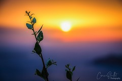 Wonderful sunset over Oia (corineouellet) Tags: focus skycolors skyview colors colorsplash greece travel canonphoto nature landscape santorini oia sunrise sunset bokeh plant view depthoffield