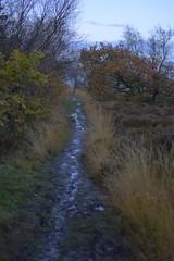Path@Twilight (Tony Tooth) Tags: nikon d600 nikkor 50mm f18g path footpath muddy november twilight dusk moor moorland gunhill countryside staffs staffordshire staffordshiremoorlands england