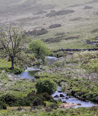 Dartmoor stream (jonathan charles photo) Tags: dartmoor stream landscape dreamy meditative mood devon art photo jonathan charles