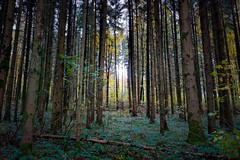 Forest - OnePlus 7t (Andreas Voegele) Tags: oneplus oneplus7t 7t forest andreasvoegelephoto autumnforest lightroom nature mobilephone smartphone