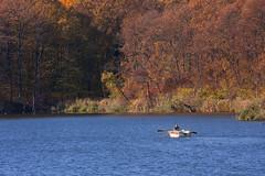 Autumn scene (Dumby) Tags: landscape ilfov românia lake boat căldărușani nature autumn fall colors outdoor